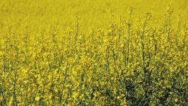 Jakie działania powinno się podejmować w zbożach na wiosnę?